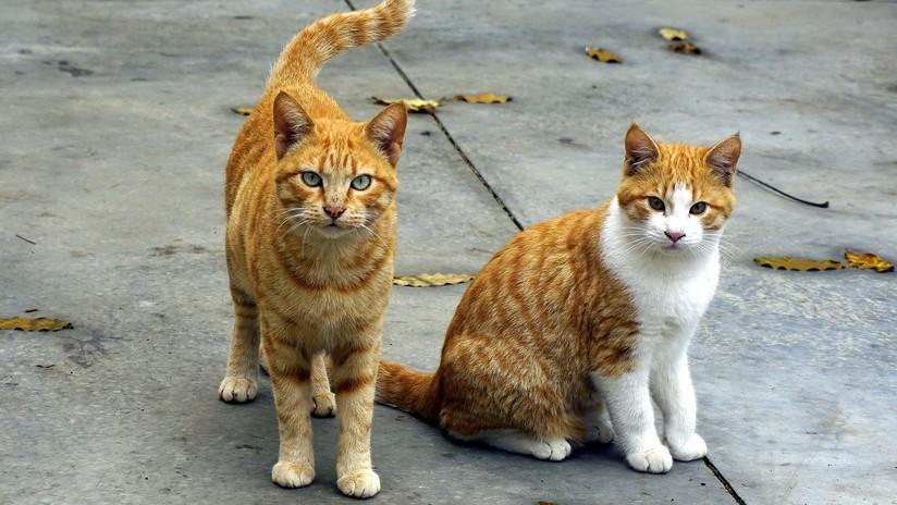 VIDEO: Varios gatos presienten un terremoto segundos antes de que sacuda Osaka
