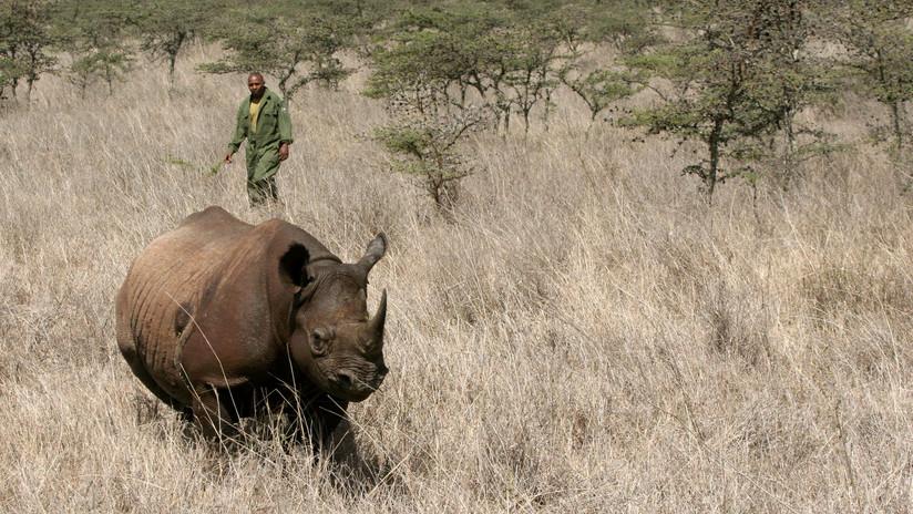 Mueren 7 rinocerontes negros tras ser trasladados a parque en Kenia