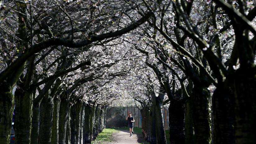 La Policía de Berlín resuelve el enigma de un misterioso corredor en coma encontrado en un parque
