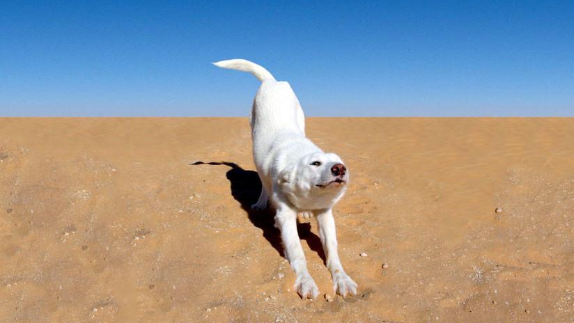 VIDEO: Decide tomar el sol en la playa, pero su perro arruina el momento