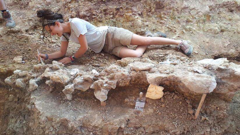 Hallan En España Restos De Dinosaurios De Unos 145 Millones De Años De Antigüedad Rt