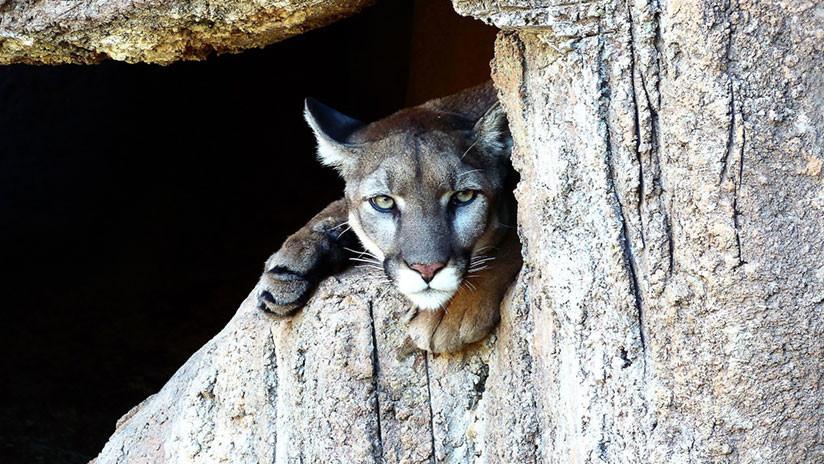 gobierno de trump busca limitar protecciones para especies en peligro de extinci u00f3n