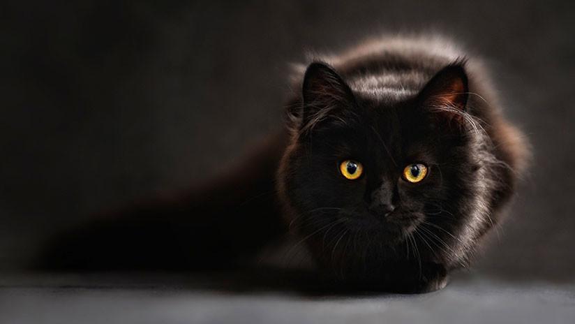Un parásito propagado por los gatos ayuda a los humanos a ser más exitosos en los negocios  5b591374e9180f53388b4567