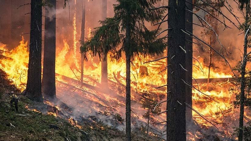"""Fuera de duda: Olas de calor e incendios forestales son """"la cara del cambio climático"""""""