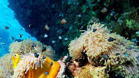 "Descubren un ""maravilloso mundo de vida"" en aguas profundas de la costa de Canadá"