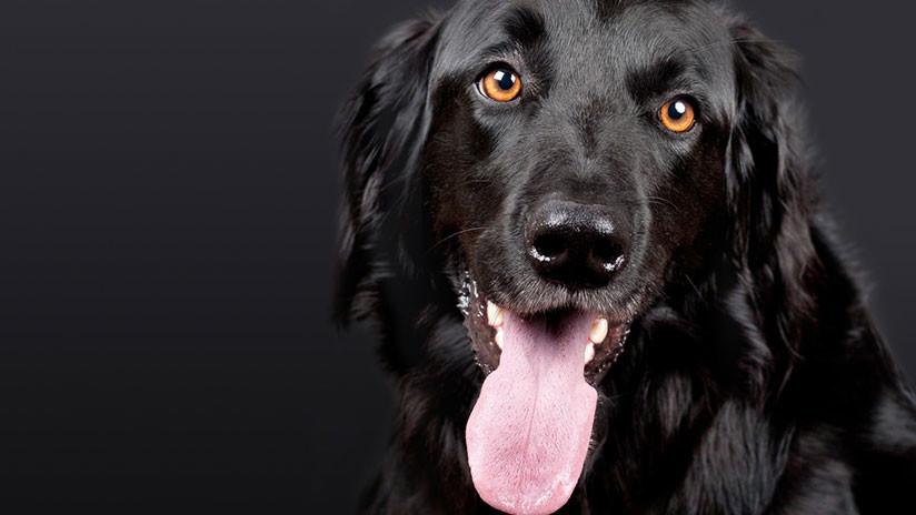 FOTOS: Pierde las piernas y la nariz tras una infección causada por una lamida de su perro