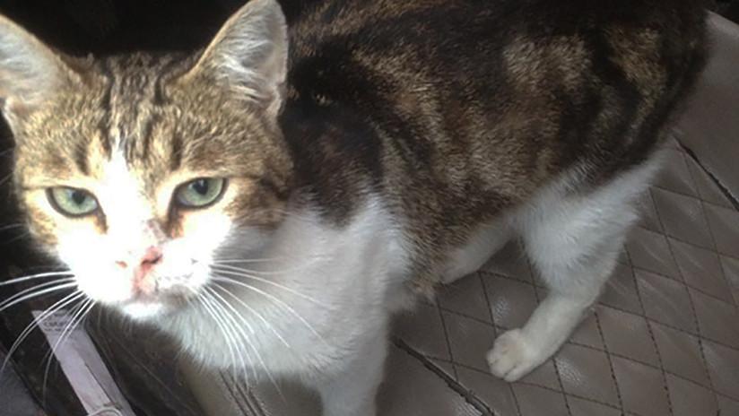 FOTOS: Un gato 'narco' es 'detenido' al introducir drogas a una cárcel en Rusia