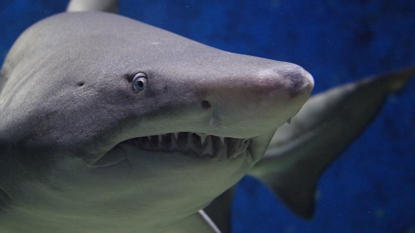 VIDEO: Un tiburón gigante aterroriza a turistas y provoca el cierre de una playa en Mallorca