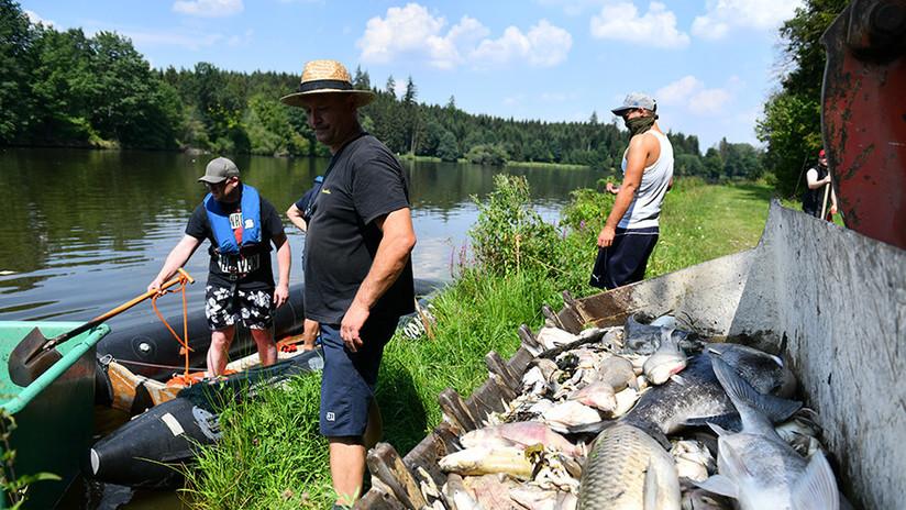 Ola de calor causa muerte masiva de peces en varias regiones de Alemania