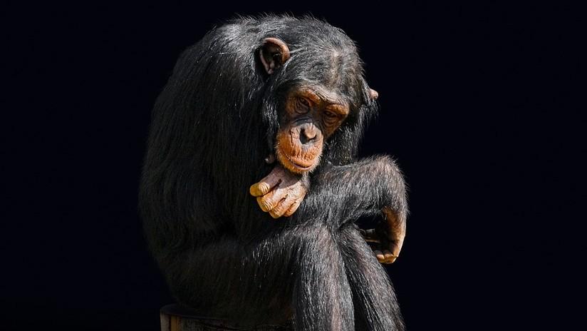 Los científicos destruyen uno de los mitos de la evolución humana