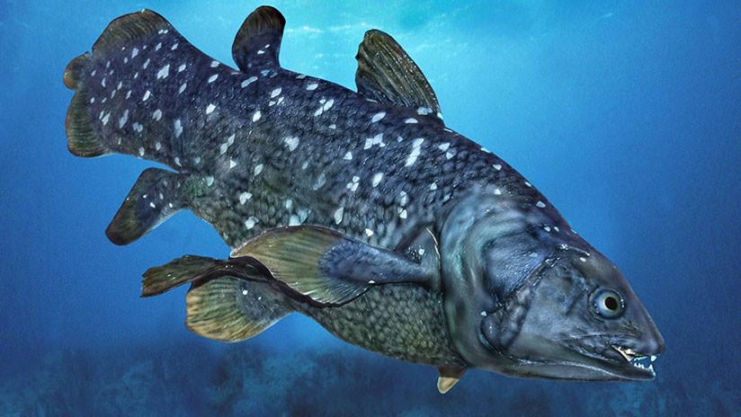 FOTOS: Una especie marina que sobrevivió a los dinosaurios muere por tragar basura de plástico