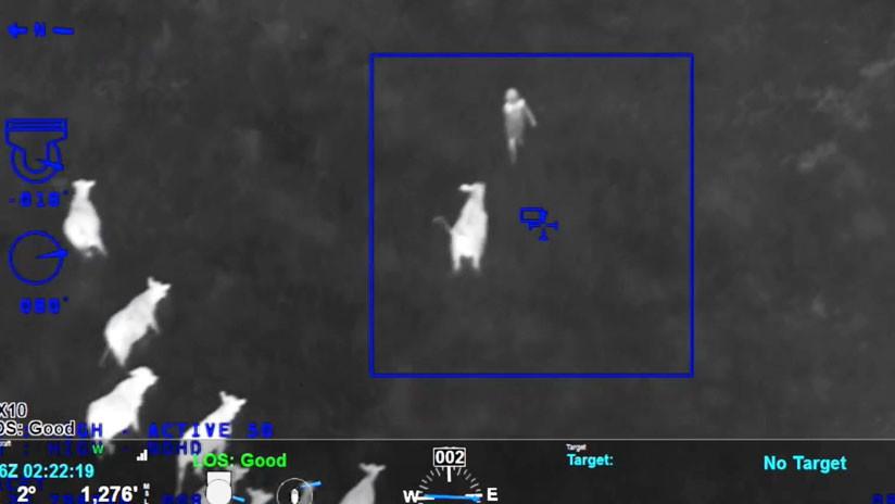 VIDEO: Unas vacas 'cazan' y arrinconan a una ladrona que huía de la Policía