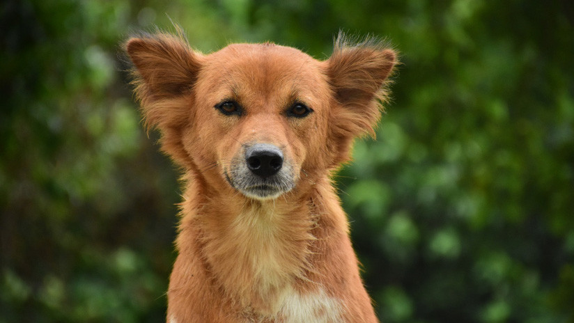 Argentina: Entró a robar a una vivienda pero se olvidó a su perro dentro (FOTO)