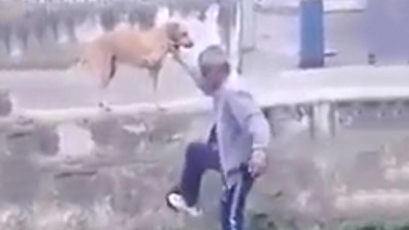 'Mala pata': Un hombre ebrio pide a su perro que le ayude a subir un muro pero algo sale mal (VIDEO)