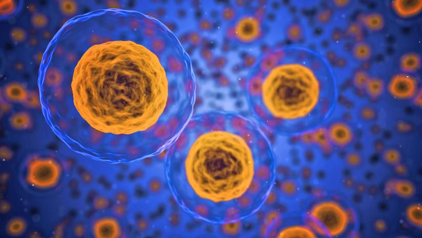Científicos logran medir a qué velocidad avanza la muerte celular