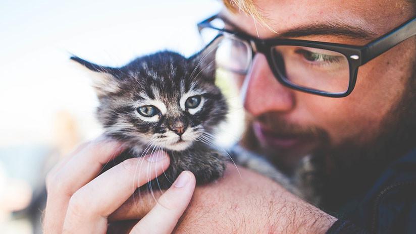 Si quieres cuidar 55 gatos en una isla  esta oferta de empleo es para