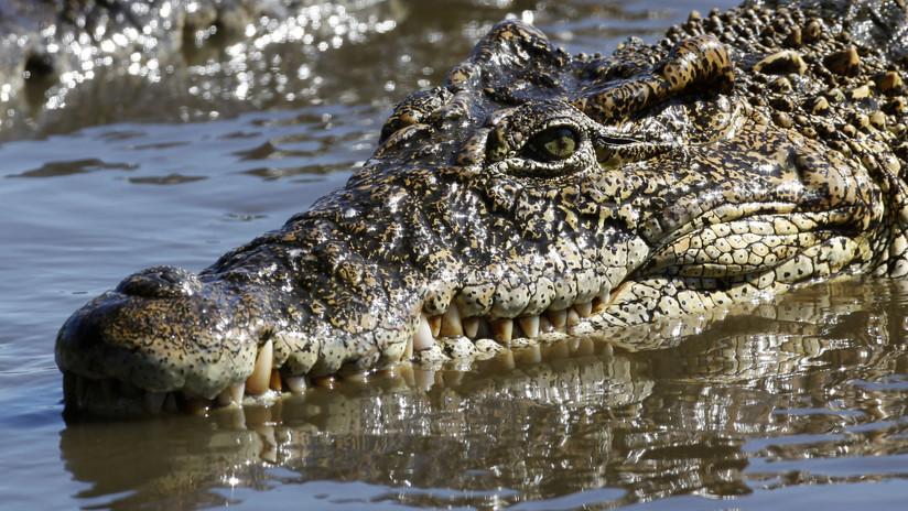 VIDEO: Acaricia a un cocodrilo en la cabeza y casi pierde la mano