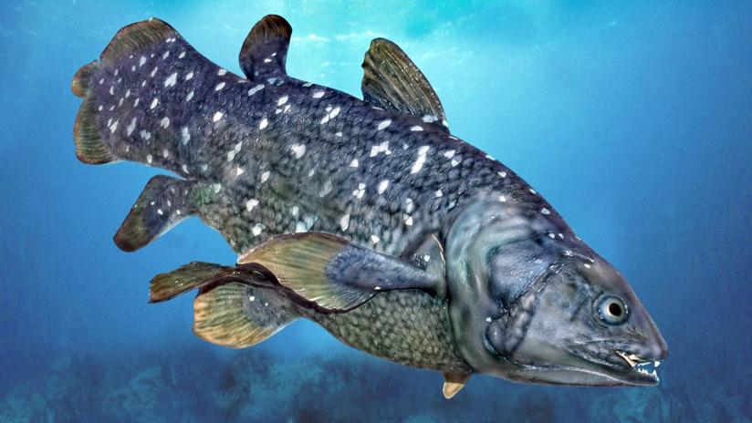 Petrolera amenaza a los últimos ejemplares de un pez que sobrevivió a los dinosaurios