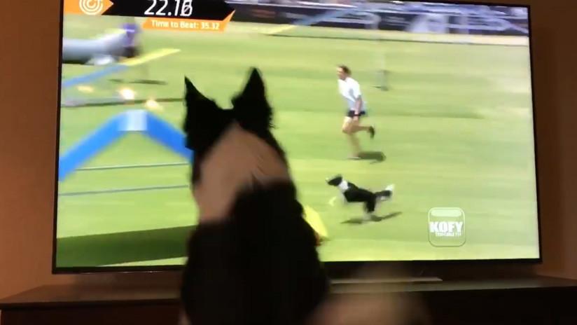 VIDEO: La sincera reacción de una perra que se ve a sí misma ganando un concurso rinde a la Red