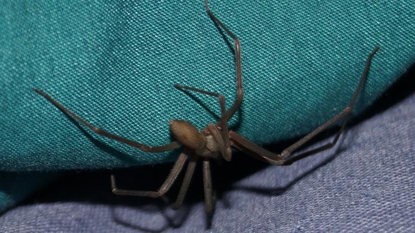 Aterrador: Una araña