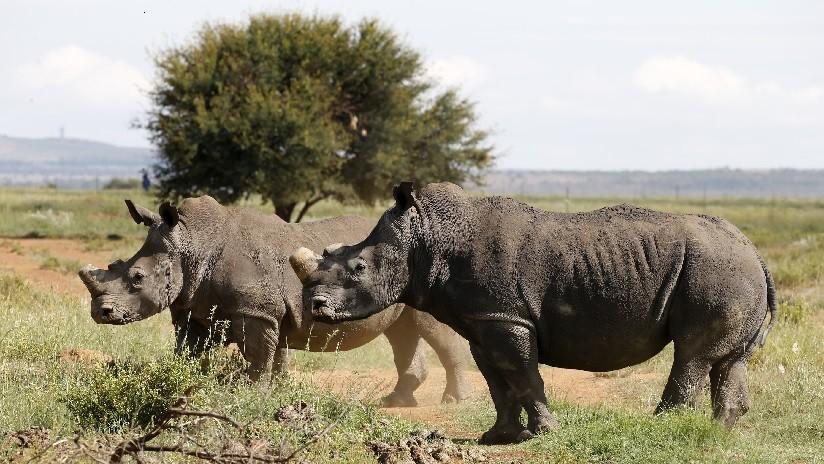 Científicos buscan salvar a especies en peligro de extinción a través de sus excrementos