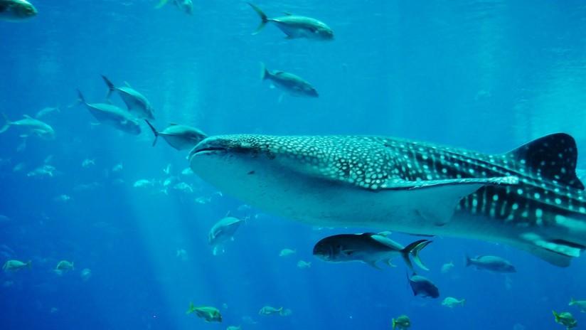 VIDEO: Un turista, a punto de ser succionado por un gigantesco tiburón