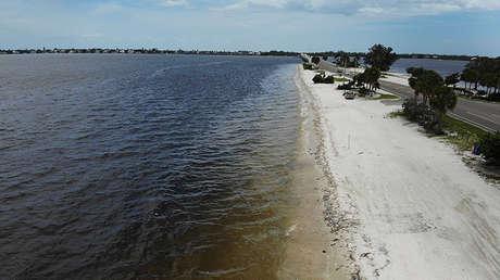 Peces muertos en la costa de Sanibel (Florida), el 1 de agosto de 2018.