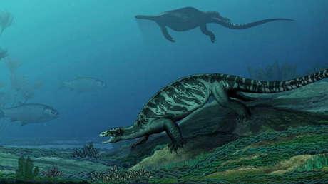 La tortuga Eorhynchochelys sinensis