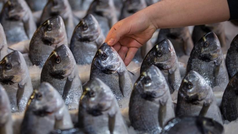 FOTOS: Venden pescado con 'lentes de contacto' para ocultar su mal estado y atraer clientes