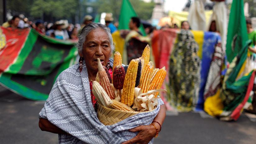Comunidades mayas acusan al Gobierno de México de no respetar su lucha contra Monsanto