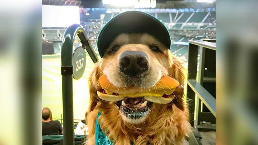 VIDEO: Un perro sostiene en su boca un perrito caliente mientras su dueño le saca una foto
