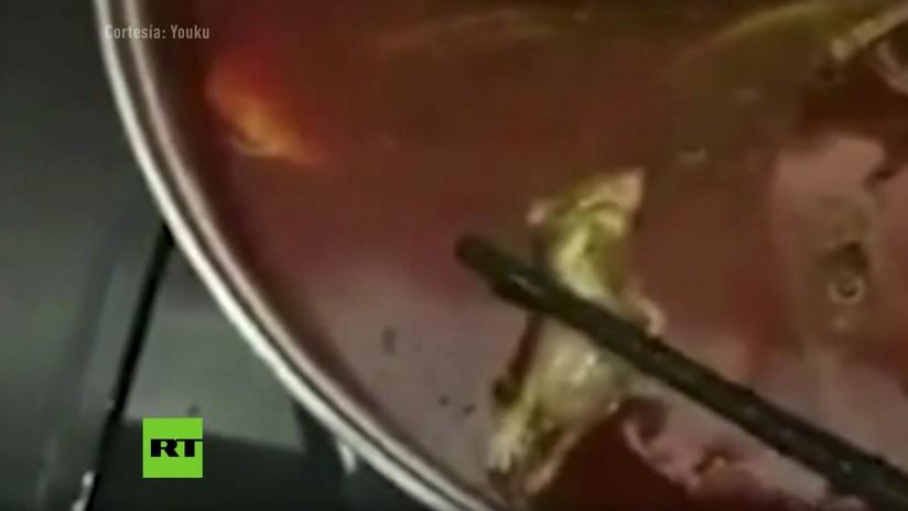 VIDEO: Una rata en una sopa le cuesta casi 200 millones de dólares a una cadena de restaurantes
