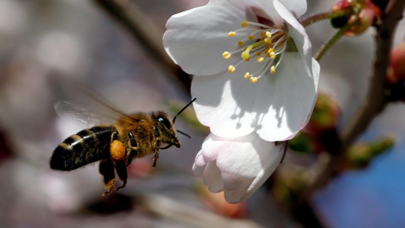 Propagación global: Insectos consumen microplásticos y los introducen en la cadena alimentaria