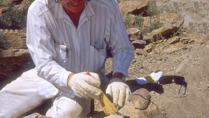 Hallan en Rusia restos orgánicos del animal multicelular más antiguo de la Tierra