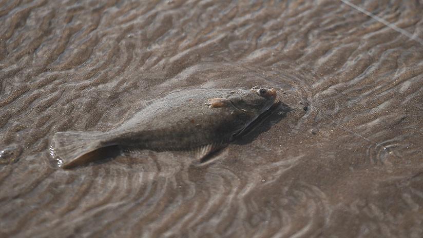 En Europa advierten a los consumidores de pescado sobre la amenaza del mercurio