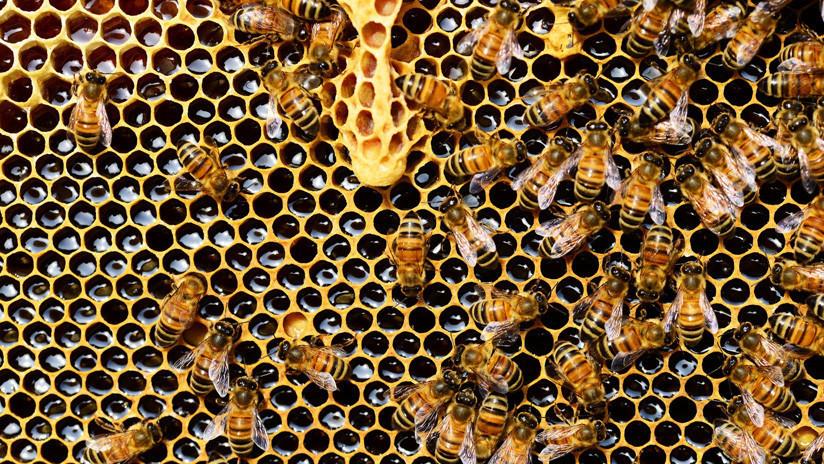 VIDEO: Encuentran una colonia de 60.000 abejas en el tejado de un hospital británico
