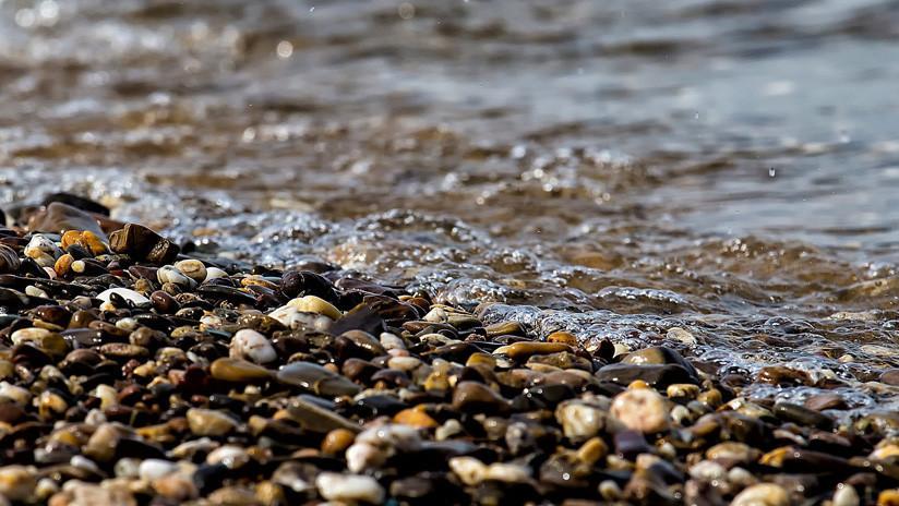 FOTOS: Hallan en una playa de Gales a una foca casi estrangulada con una red de plástico