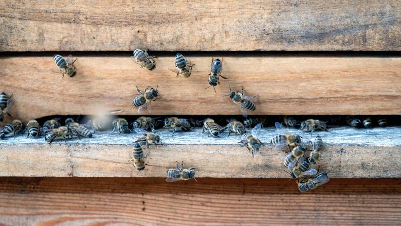 El glifosato de Monsanto causa daños mortales en las abejas