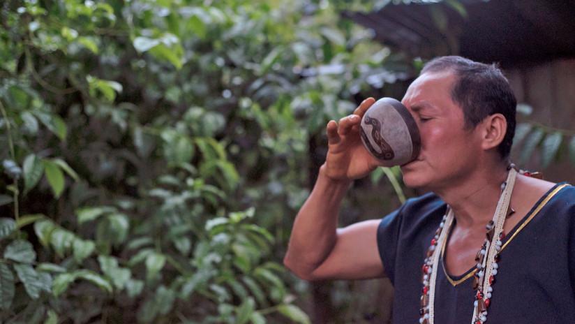 """Guayusa, el estimulante natural con el que los ecuatorianos buscan """"energizar al mundo"""""""