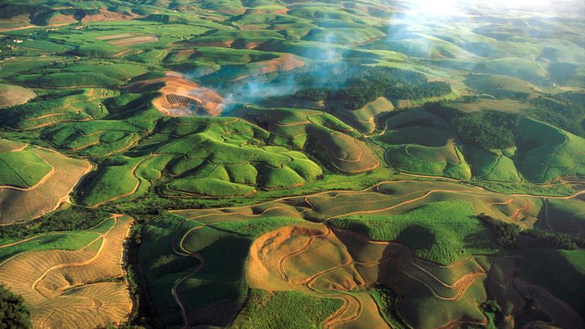 Un vórtice de extinción amenaza uno de los bosques más importantes del mundo