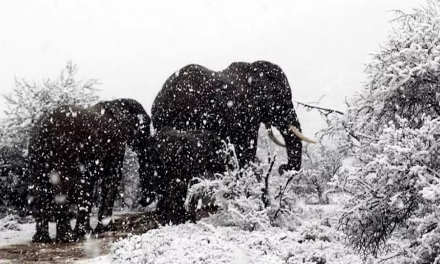 Insólita ola a de frío polar y nevadas en Sudáfrica
