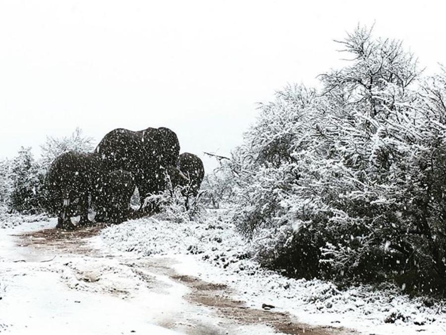 Inusual nevada en Sudáfrica y así se comportaron los animales