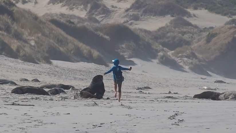 Una turista baila al lado de un lobo marino en la playa y casi resulta atacada por el animal