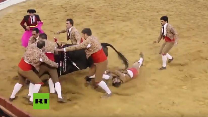 VIDEO: Mozo pierde el conocimiento al tratar de inmovilizar a un toro en una corrida en Portugal