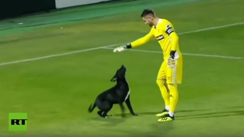 VIDEO: Un perro invade la cancha y paraliza durante varios minutos un partido de fútbol