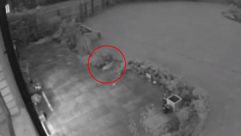 """VIDEO: Un """"gato fantasma"""" pasea por un patio segundos antes de desaparecer"""