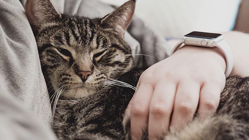 Un felino con mucho 'ojo clínico': Su gata le salva dos veces de las garras del cáncer