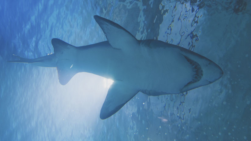 Tropieza mujer en estanque repleto de tiburones