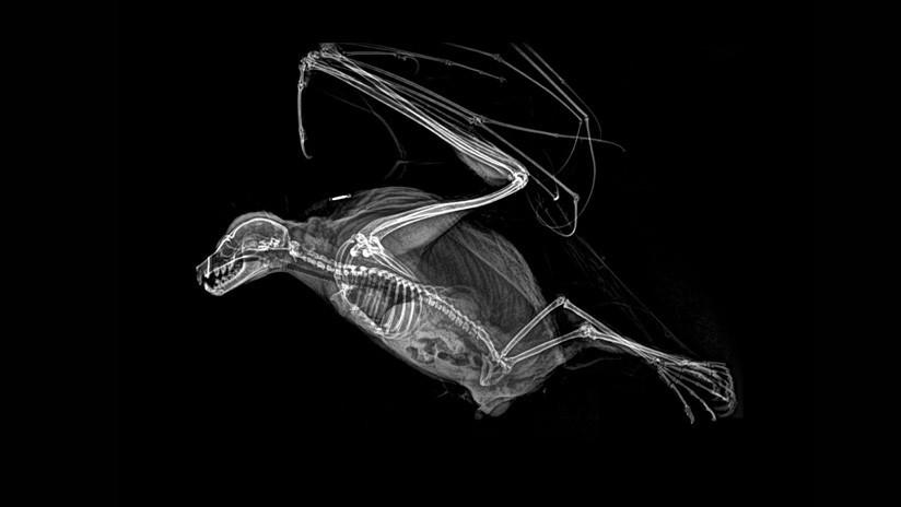 Fotos que llegan al corazón: Las 5 radiografías de animales que entusiasman a la Red