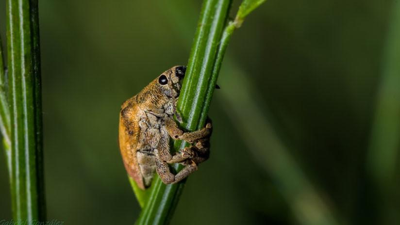 El cambio climático sí que 'mata una mosca': Alarma científica por la reducción masiva de insectos